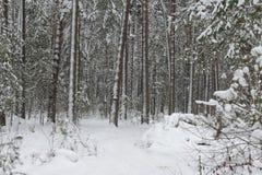 Weg in het bos met sneeuw wordt behandeld die royalty-vrije stock foto's