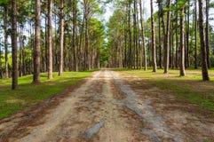 Weg in het bos van de pijnboomboom Royalty-vrije Stock Foto's