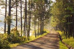 Weg in het bos van Pijnboombomen Stock Afbeeldingen