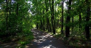 Weg in het bos, zomer stock footage
