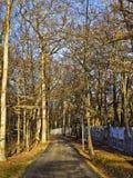 Weg in het bosje woods Royalty-vrije Stock Afbeelding