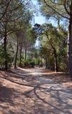 Weg in het bosje woods Stock Fotografie