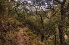 Weg in het cork eiken bos stock afbeelding