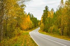 Weg in het de herfstbos royalty-vrije stock foto