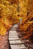 Weg in het de herfstbos Stock Afbeeldingen