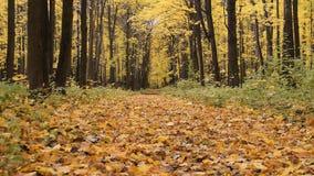 Weg in het de herfstbos stock videobeelden