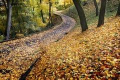 Weg in het de herfstpark Royalty-vrije Stock Afbeeldingen