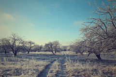 Weg in het de winter boslandschap het zachte stemmen Royalty-vrije Stock Foto