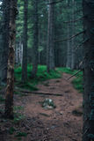 Weg in het donkergroene hout stock afbeelding