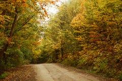 Weg in het herfstbos Royalty-vrije Stock Foto's