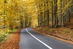 Weg in het herfstbos Stock Foto