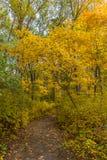 Weg in het hout tijdens piekdalingsgebladerte Stock Foto's