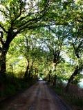 Weg in het land, de groene bomen en de grassen stock afbeeldingen
