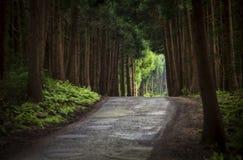 Weg in het midden van de boseilanden Portugal van de Azoren Stock Foto's