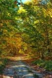 Weg in het mistige de herfstpark Stock Fotografie