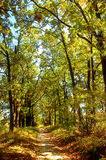 Weg in het mistige de herfstpark Royalty-vrije Stock Foto's