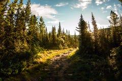 Weg in het nette bos bij dageraad in de bergen Stock Foto