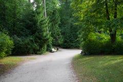 Weg in het park in palanga Stock Fotografie