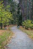 Weg in het park in palanga Royalty-vrije Stock Foto