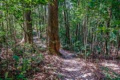Weg in het regenwoud Stock Afbeelding
