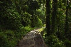 Weg in het tropische bos stock afbeeldingen