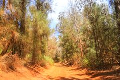 Weg in het zonnige bos royalty-vrije stock foto