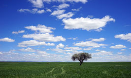 Weg hinter dem Baum Lizenzfreie Stockfotografie
