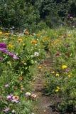 Weg hoewel een tuin van de zomerwildflowers royalty-vrije stock fotografie