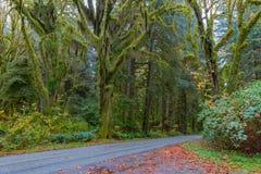 Weg in Hoh Rainforest Royalty-vrije Stock Foto's