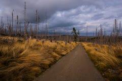 Weg im böhmischen Wald lizenzfreie stockfotografie