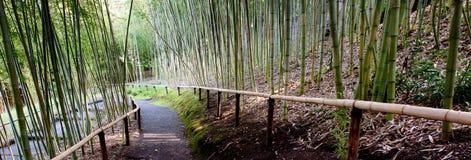 Weg im Bambusgarten lizenzfreie stockfotos