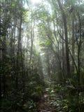 Weg im Dschungel stockfotografie