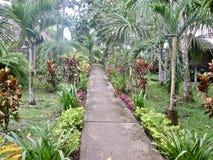 Weg im Dschungel gefärbt stockbild