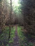 Weg im dunklen Wald lizenzfreie stockfotografie