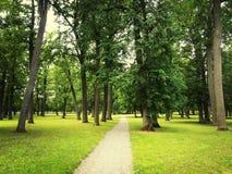 Weg im grünen Sommerpark Lizenzfreies Stockbild