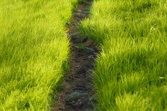 Weg im Gras Stockfotos