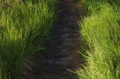 Weg im Gras Lizenzfreie Stockfotografie