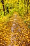 Weg im Herbstholz Stockfoto