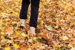 Weg im Herbstlaub Stockbild