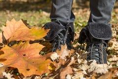 Weg im Herbstpark Stockbilder