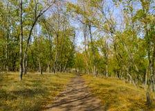 Weg im Herbstwald Stockbild