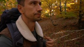 Weg im Herbstwald stock video footage