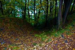 Weg im Herbstwald Stockfoto