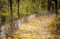 Weg im Herbstwald Lizenzfreie Stockfotos