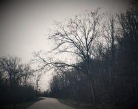 Weg im Holz Stockfoto