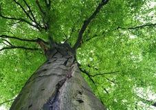 Weg im Holz lizenzfreie stockfotos