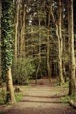 Weg im Holz Stockbild