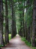 Weg im Holz Stockbilder