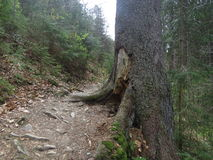 Weg im Holz Lizenzfreie Stockbilder
