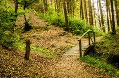 Weg im Holz Lizenzfreies Stockbild